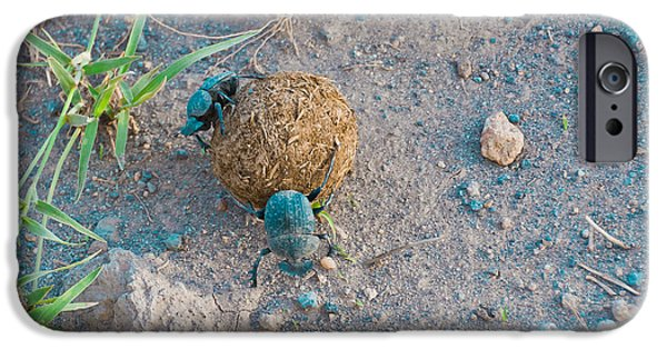 Elephants iPhone Cases - Dung Beetles No. 2 iPhone Case by Beth Wolff