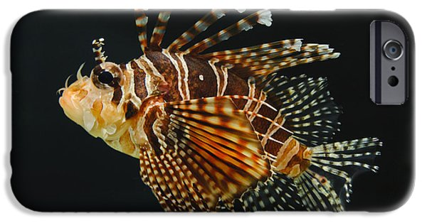 Underwater Photos iPhone Cases - Dwarf Lionfish iPhone Case by John Shaw