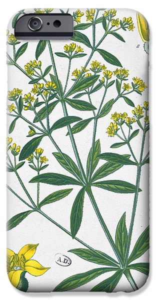 Petals Drawings iPhone Cases - Dyers Madder iPhone Case by French School
