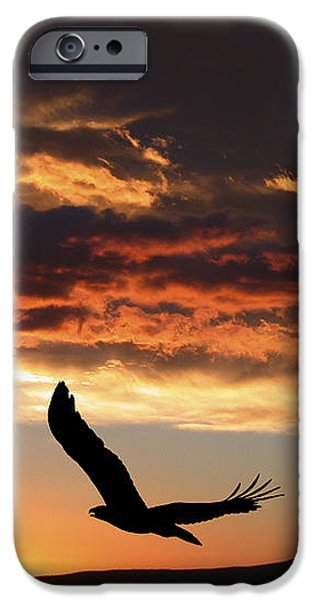 Pines iPhone Cases - Eagle at Sunset iPhone Case by Shane Bechler
