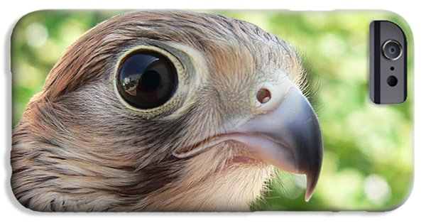 Eagle Photographs iPhone Cases - Eagle Eye iPhone Case by Ellen Henneke