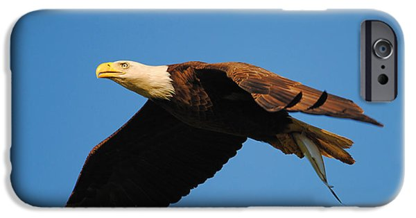 Eagle Photographs iPhone Cases - Eagle in Flight With Fish iPhone Case by Jai Johnson