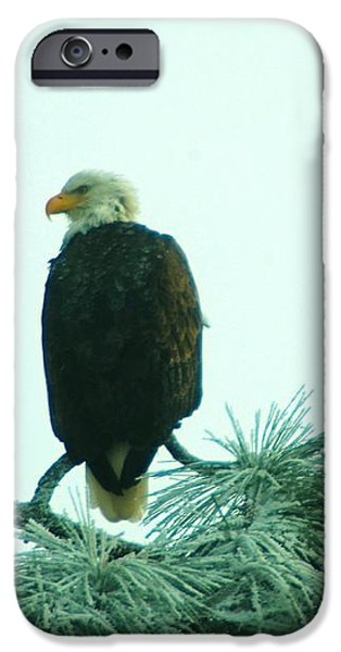 EAGLE ON A FROZEN PINE iPhone Case by Jeff  Swan