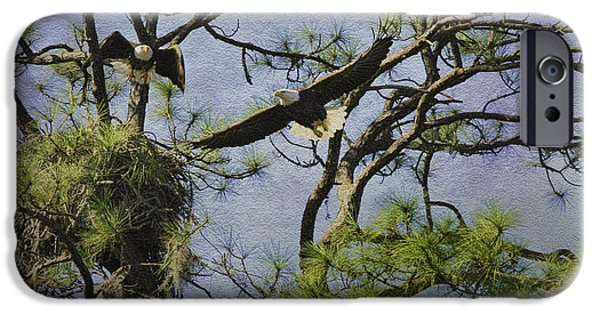 Pines Mixed Media iPhone Cases - Eagle Pair and Nest iPhone Case by Deborah Benoit