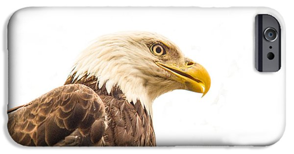 Preditor iPhone Cases - Eagle With Prey Spied iPhone Case by Douglas Barnett
