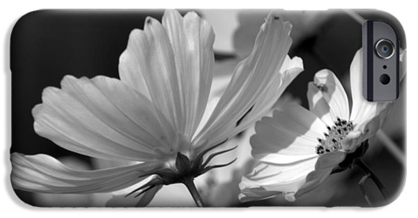 Pinks And Purple Petals Digital iPhone Cases - Early Dawns Light On Fall Flowers BW 02 iPhone Case by Thomas Woolworth