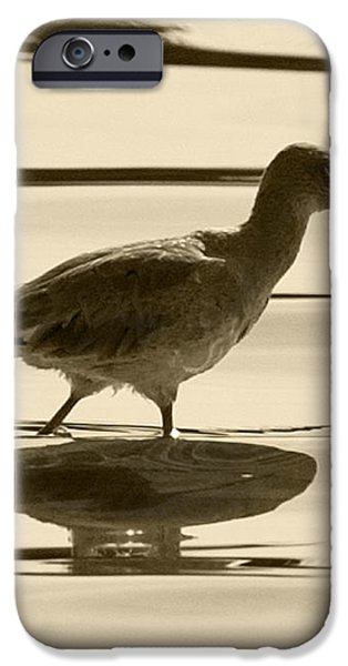 Early Morning in the Moss Landing Harbor Picture of a Willet iPhone Case by Artist and Photographer Laura Wrede