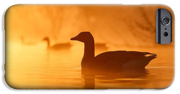 Birds iPhone Cases - Early Morning Mood iPhone Case by Roeselien Raimond