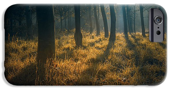Fall Grass iPhone Cases - Early morning woodland walk iPhone Case by Chris Fletcher