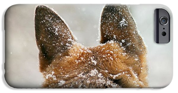 Dog In Landscape iPhone Cases - Ears of Distinction iPhone Case by Michele Thielke