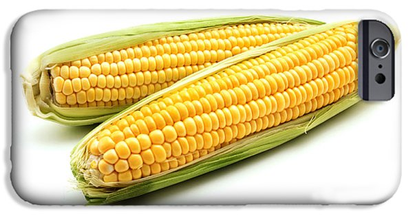 Corn iPhone Cases - Ears of maize iPhone Case by Fabrizio Troiani