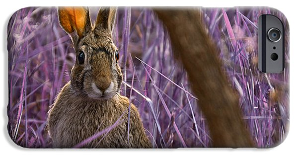 Recently Sold -  - Fauna iPhone Cases - Easter Bunny iPhone Case by Douglas Barnard