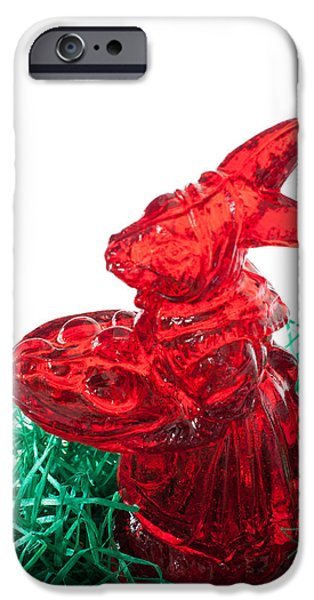 March Hare iPhone Cases - Easter Bunny iPhone Case by Frank Gaertner
