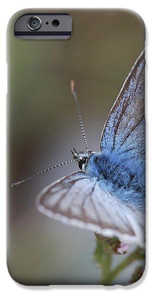 Eastern Baton Blue  iPhone Case by Amos Dor