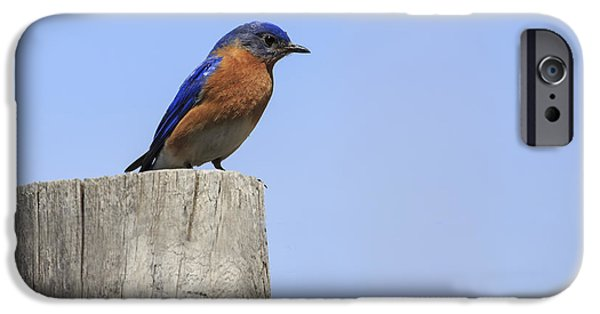 Small iPhone Cases - Eastern Bluebird 4 iPhone Case by Gary Hall