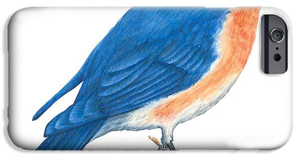 Animal Drawings iPhone Cases - Eastern bluebird iPhone Case by Anonymous