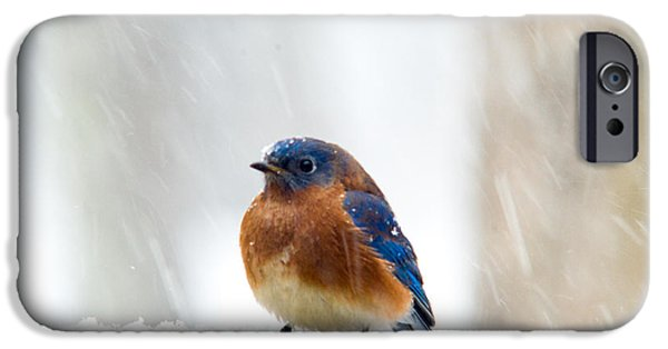 Membrane iPhone Cases - Eastern Bluebird in the Falling Snow iPhone Case by Douglas Barnett
