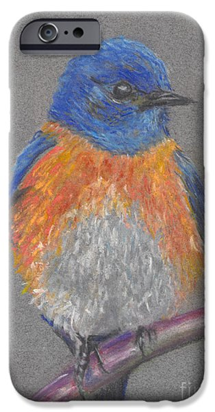 Fauna Pastels iPhone Cases - Eastern Bluebird iPhone Case by Michelle Reeve