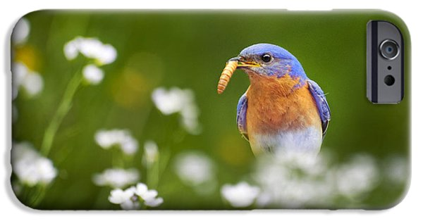Bluebird iPhone Cases - Eastern Bluebird with Worm iPhone Case by Christina Rollo