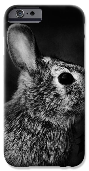 Eastern Cottontail Rabbit Portrait iPhone Case by Rebecca Sherman