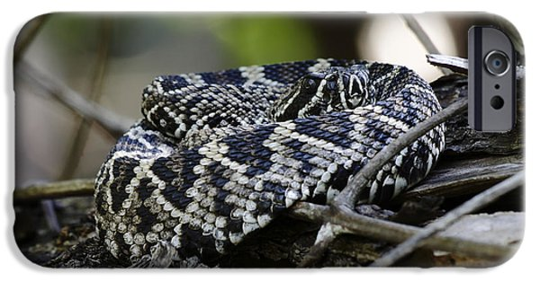 Serpent iPhone Cases - Eastern Diamondback-1 iPhone Case by Rudy Umans
