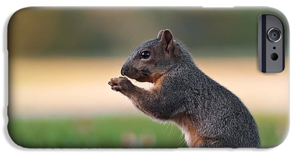 Fox Squirrel iPhone Cases - Eastern Fox Squirell iPhone Case by Brandon Alms