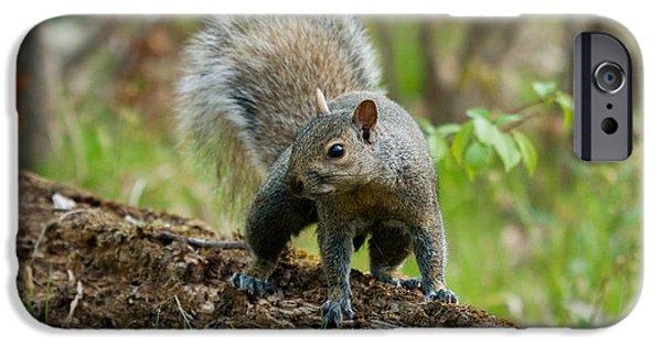 Sciurus Carolinensis iPhone Cases - Eastern Gray Squirrel iPhone Case by Linda Freshwaters Arndt