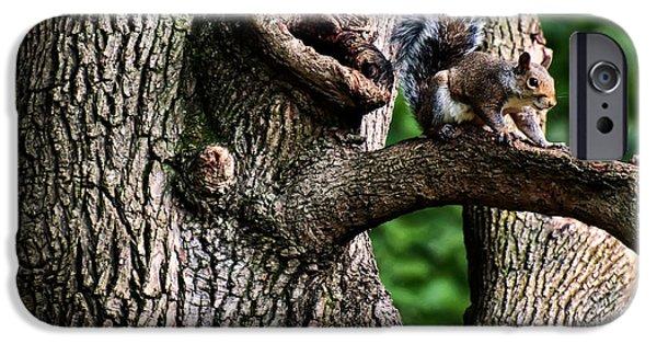 Sciurus Carolinensis iPhone Cases - Eastern Grey Squirrel iPhone Case by Chris Flees