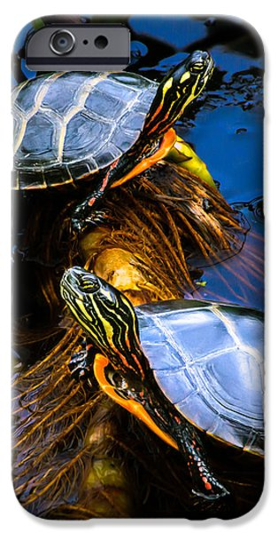 Reptile iPhone Cases - Eastern Painted Turtles iPhone Case by Bob Orsillo