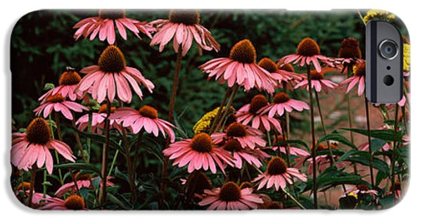 Flora iPhone Cases - Eastern Purple Coneflower Echinacea iPhone Case by Panoramic Images