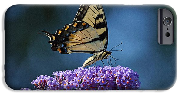 Indiana Flowers iPhone Cases - Eastern Tiger Swallowtail Butterfly iPhone Case by Sandy Keeton