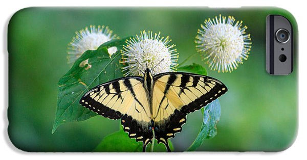 Insect Pyrography iPhone Cases - Eastern Tiger Swallowtail iPhone Case by Rebecca Brooks