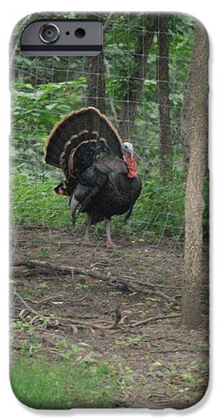Eastern Tom Turkey iPhone Case by Mark McReynolds