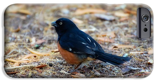 Beauty Mark iPhone Cases - Eastern Towhee iPhone Case by Rich Leighton