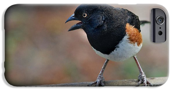 Seagull iPhone Cases - Eastern Towhee iPhone Case by Skip Willits