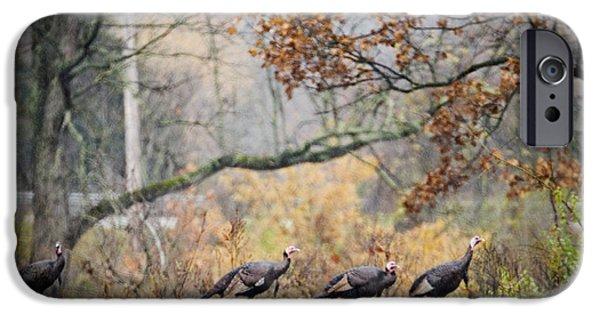 Eastern Wild Turkey iPhone Cases - Eastern Wild Turkey  iPhone Case by Walter Herrit