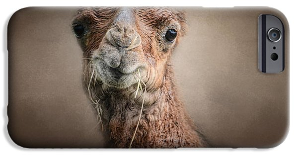 Camel Photographs iPhone Cases - Eat Your Veggies - Baby Camel - Wildlife iPhone Case by Jai Johnson