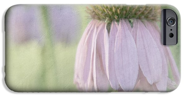 Cone Flower iPhone Cases - Echinacea Coneflower iPhone Case by Juli Scalzi