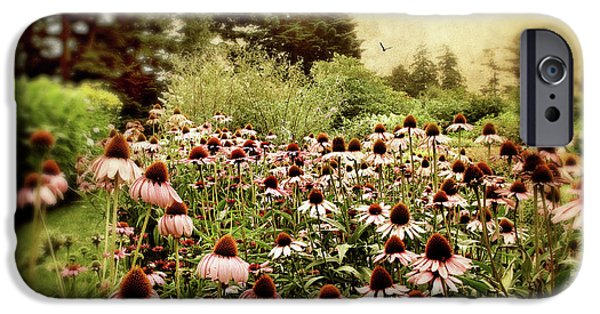Cone Flower iPhone Cases - Echinacea Garden iPhone Case by Jessica Jenney