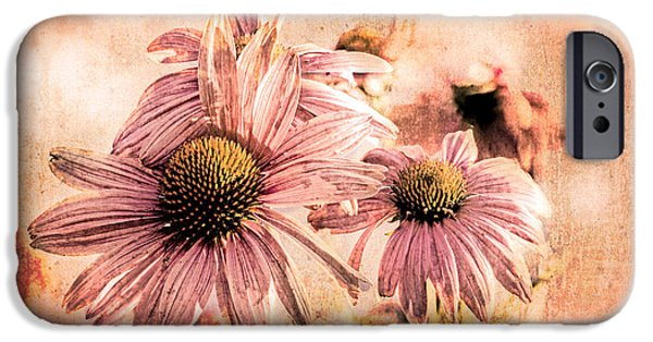 Cone Flower iPhone Cases - Echinacea Impressions  iPhone Case by Bob Orsillo