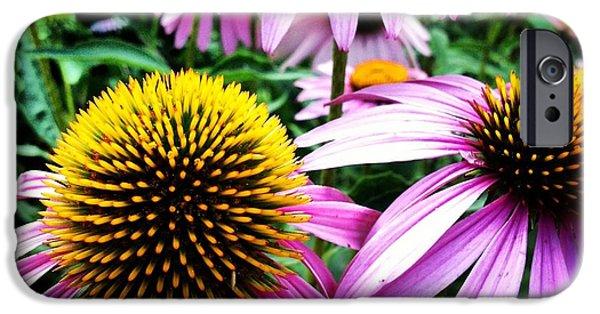 Echinacea iPhone Cases - Echinacea iPhone Case by Jeff Klingler