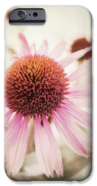 Close Up Floral iPhone Cases - Echinacea iPhone Case by Priska Wettstein