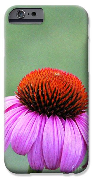 Fauna iPhone Cases - Echinacea purpurea 3 iPhone Case by Elizabeth Matlock