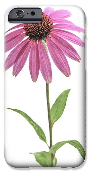 Echinacea iPhone Cases - Echinacea purpurea flower iPhone Case by Elena Elisseeva