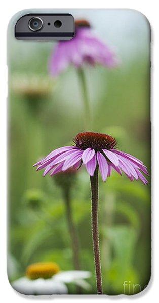 Echinacea iPhone Cases - Echinacea Purpurea Magnus  iPhone Case by Tim Gainey