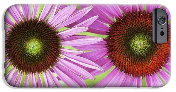 Echinacea iPhone Cases - Echinacea Purpurea Rubinglow Pattern iPhone Case by Tim Gainey