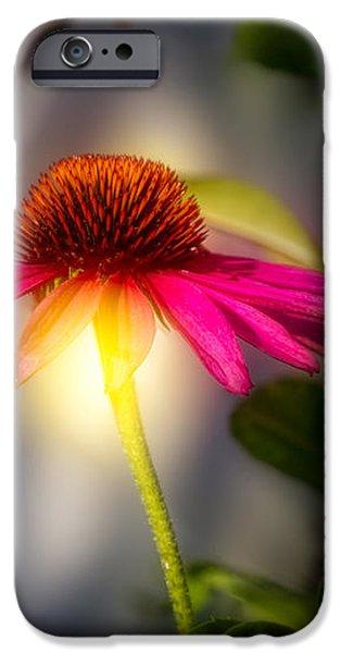 Echinacea Sunrise iPhone Case by Bob Orsillo