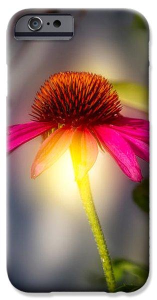 Cone Flower iPhone Cases - Echinacea Sunrise iPhone Case by Bob Orsillo