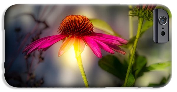Cone Flower iPhone Cases - Echinacea Sunrise iPhone Case by Bob Orsillo