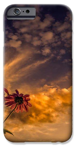 Echinacea Sunset iPhone Case by Bob Orsillo